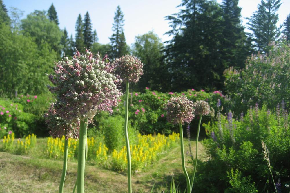 В Ботаническом саду