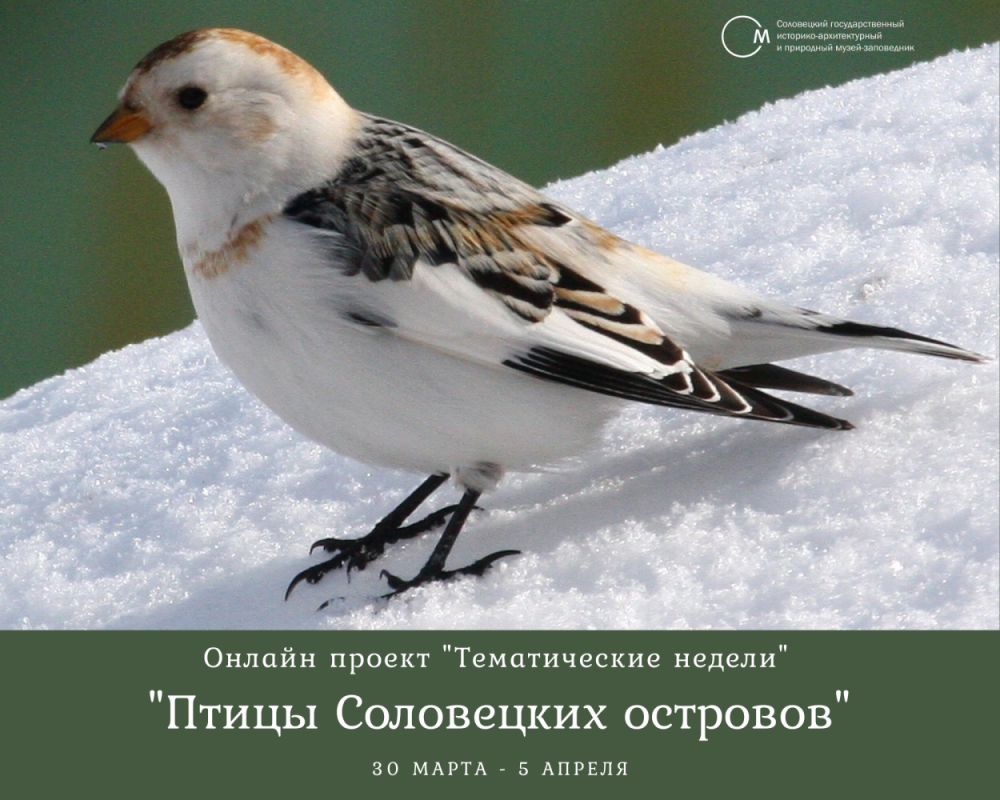 Пуночка. Фото: Юрий Гендлин